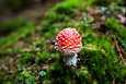 Kysyimme asiantuntijoilta, mitä sieniharrastusta aloittelevan on tiedettävä.