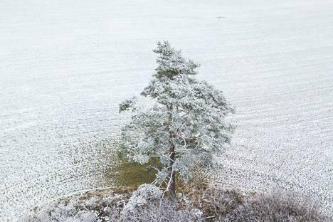 Pellon ohut lumikerros tuskin kestää loppuviikon vesisateita.