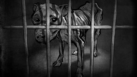 Satakunnan käräjäoikeuden vuosina 2015–2020 antamissa eläinsuojelurikostuomioissa rikoksen kohteena on usein ollut koira. Aliravitsemus ja muiden perustarpeiden laiminlyönti on niiden perusteella yleistä rikoksissa.