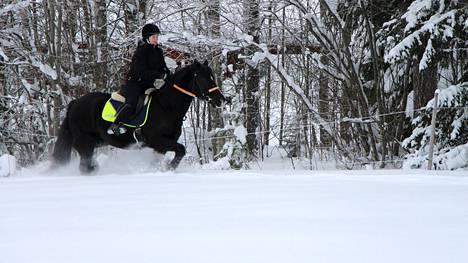 Hevosharrastajille on tänä talvena kunnon hanget, mistä nauttia.