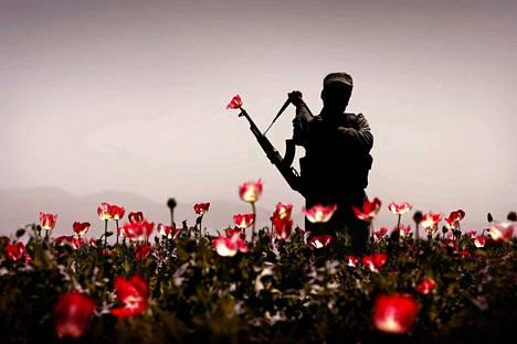Valokuvaaja Hannes Heikuran kuva sotilaasta vartioimassa unikkopeltojen tuhoamista Kandaharissa Afganistanissa voitti Fotofinlandia-palkinnon vuonna 2008.