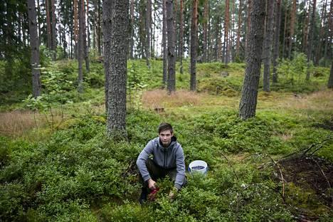 Ilari Saukonoja, 15, on kerännyt tänä kesänä jo 25 litraa mustikoita. Marjoja Saukonoja on poiminut Lempäälän metsistä, mutta tarkemmin hän ei halua paljastaa salaista marjapaikkaansa.