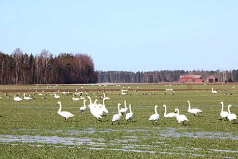 Tällaisia eläimiä oli perjantaina Kokemäen Kuurolassa.