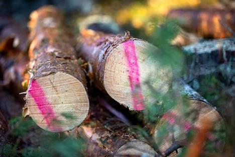 Pomarkun Ruokejärven metsikkökuvion pöllit on merkitty eri värein ajokoneenkuljettajaa varten. Valtaosa puutavaralajeista jalostetaan Satakunnassa. Metsä Group rakentaa parhaillaan Raumalle maailman moderneinta sahaa. – Mäntytukin hankintamäärä tulee kasvamaan. Uskon, että kyllä me puuta saadaan. Asiakaskuntamme on laaja ja hankinta-alueillamme on hyvin hoidettuja metsiä, Korkiamäki kertoo.