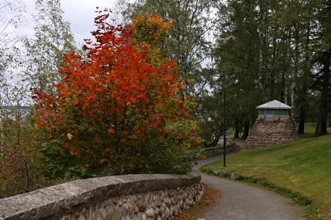 Näsinpuiston puut ovat tällä hetkellä monenkirjavia ja erityisesti vaahteroista voi löytää vaikka minkä värisiä lehtiä.