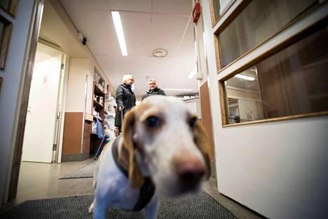 Adressin allekirjoittajien mukaan eläinlääkäripäivystyksen taso pitää säilyttää vähintään nykyisen tasoisena palveluna. Arkistokuva.