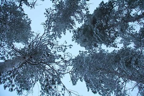 Korona lisäsi kiinnostusta luonnossa liikkumiseen, mutta kaikki eivät ole metsässä kuin kotonaan.