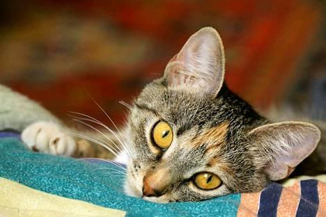Kuvan kissa ei ole uutisessa kerrottu Aatu