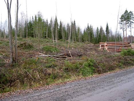 Muokatusta hakkuuaukeasta ei tule marjastus- tai sienestysmaastoa tämän eikä seuraavankaan sukupolven aikana. Toisinaan vaikuttaa siltä, että ei tule metsääkään kovin nopeasti. Taimet kuihtuvat heinikön tukehduttamina. Kuva avohakkuusta vuodelta 2011.