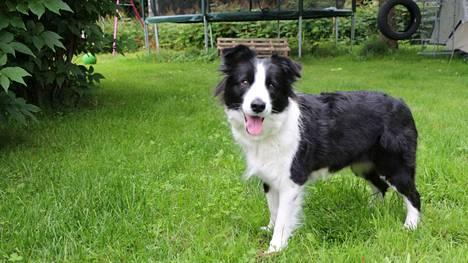 Keväällä ja kesällä maaliskuun alusta elokuun 19. päivään koirat on pidettävä kytkettynä, jotta luonnoneläimillä on pesintärauha.