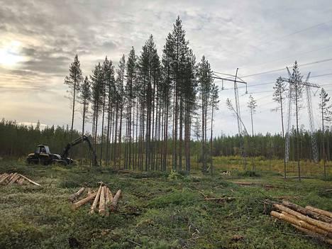 Uuden metsälinjan pohjoisimmassa osassa, kuten kuvan Pyhänselällä, puustoraivaukset on pääosin jo tehty. Parhaillaan hakataan Haapajärven ja Saarijärven pohjoispuolella.