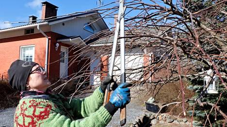Yhden naisen yrityksessä on vapaus valita, mitä minäkin päivänä tekee. Huhtikuussa Tarja Härkisuon kalenterissa on paljon omenapuiden leikkauksia, mutta myös pihasuunnittelua.