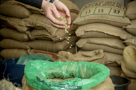Brasilian seuraavasta kahvisadosta ennustetaan maan historian suurinta. Kuvituskuva.