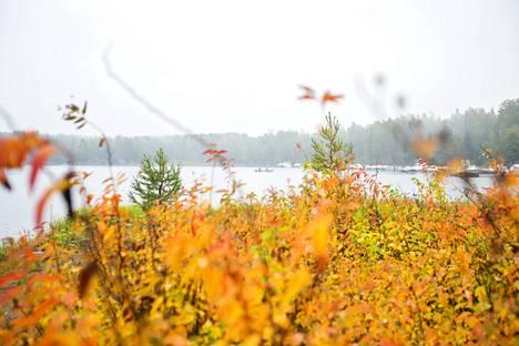 Apianlahdella näkyi jo jonkin verran syksyn värjäämiä puita ja pensaita sateisena päivänä 12. syyskuuta.