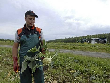Kyssäkaali kuuluu Taatilan maatilan uutuuskasveihin. Hyvälaatuiset kotimaiset kasvikset kelpaavat kuluttajille, tietää Niko Jokinen.