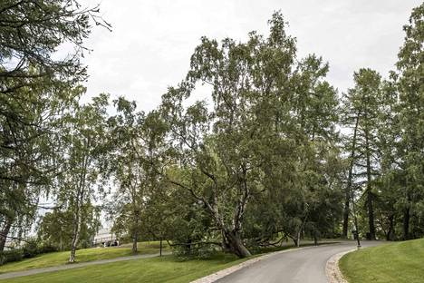 Näsinpuisto sijaitsee mäen päällä.