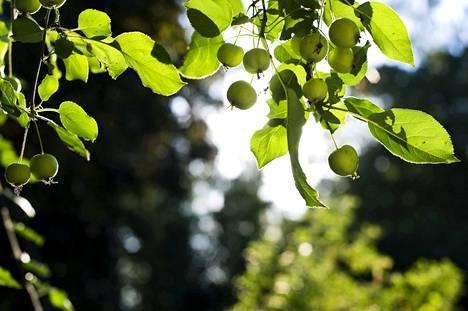 Arboretumilla Hatanpäällä on lukuisia kasvilajeja.