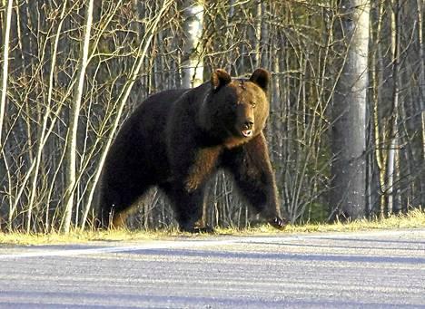 Karhu on Suomen kansalliseläin. Karhuja esiintyy koko Suomessa Ahvenanmaata lukuun ottamatta. Eniten karhuja on Itä-Suomessa ja Lapissa.