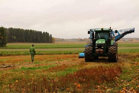 Vielä on korjuutöitä jäljellä. Hannu Heikolan pelloilla on 90 hehtaarin ala sokerijuurikasta nostamatta.