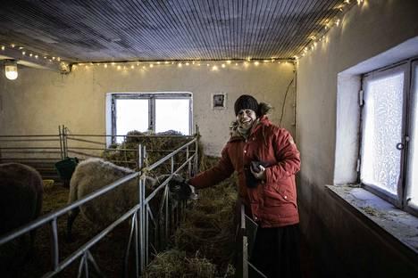 Ira Hellstén kasvattaa miehensä kanssa Kurjen tilalla kyyttö-karjaa ja lampaita. Hänen valintansa lihansyöntiin on päinvastainen kuin monilla muilla. –Minä ajattelen sen niin päin, etten syö ketään, jota en tunne.
