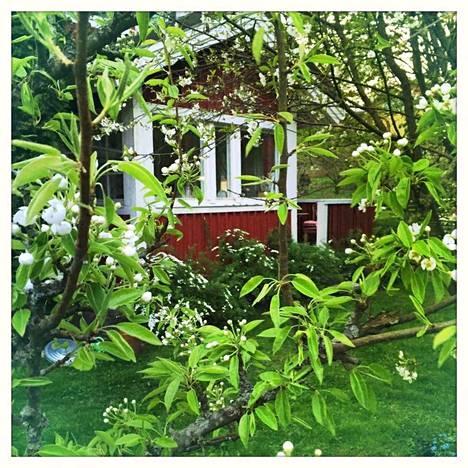 Talon edessä päärynäpuu on kukassa.