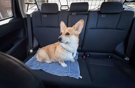 Eläintä ei saa jättää edes varjoon pysäköityyn tai käynnissä olevaan ilmastoituun autoon, HESYstä kerrotaan.