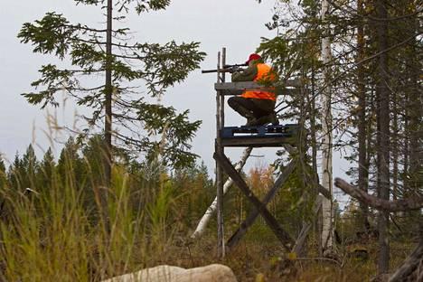 Hirviä saa uuden asetuksen mukaan metsästää tammikuun puoliväliin asti.