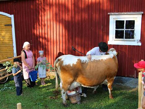 Lehmän takana piilossa oleva Anu Andersson oli saanut mukaansa lypsynäytökseen koko perheensä.