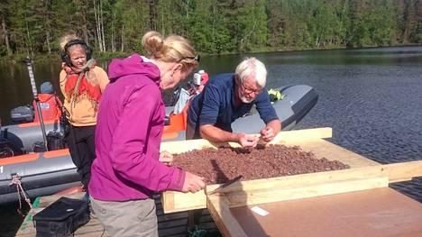 Tutkijat tarkastelevat järvenpohjasta pumpattua sedimenttiä tutkimuslautalla.