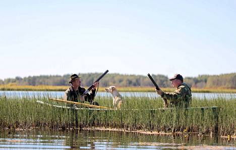 Käsittele aseita varovasti! Sorsalintujen metsästys alkoi maanantaina.