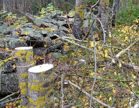 Lukijan mukaan raivuun jäljiltä jääneet pitkät kannot eivät ole riski pelkästään metsäkoneille. Marjastajille ja muille metsissä jokamiehenoikeudella liikkuville ne voivat olla suorastaan vaarallisia.