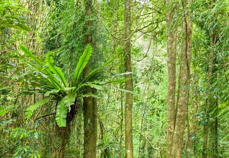 WWF huomauttaa, että kasvi- ja eläinlajeja katoaa kiihtyvällä tahdilla ilmaston lämmetessä. Esimerkiksi maailman selkärankaisista hävisi 60 prosenttia jo vuosina 1970-2012, ja tahti kiihtyy.