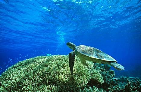 Jos ilmasto lämpenisi kahdella asteella, merenpinnan nousu jatkuisi ja eliölajeja kuolisi sukupuuttoon.