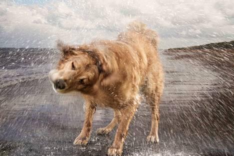 Koirien salainen elämä -sarja näyttää, kuinka monin eri tavoin koira auttaa ja ilahduttaa ihmistä.