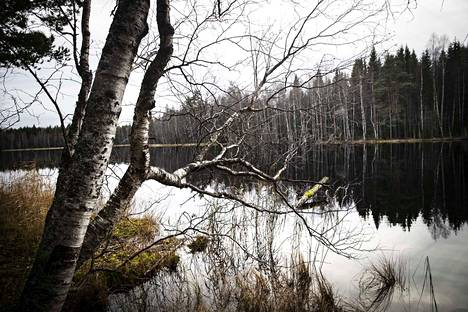 """Koko Koukkujärven voi nyt kiertää lenkkikengillä """"kuivin jaloin"""", vaikka alueella on suopohjaista maastoa."""