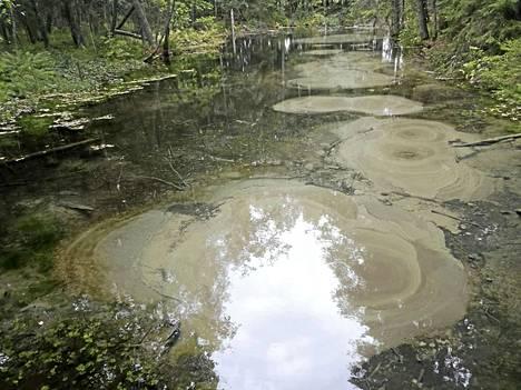 Pohjavesi purkautuu luontaisesti maanpinnan yläpuolelle lähteissä.