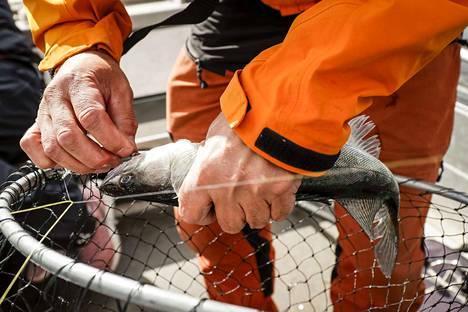 Suomen Vapaa-ajankalastajien Keskusjärjestö katsoo ettei kalastuslakia tule muuttaa ministeriön esittämällä tavalla.