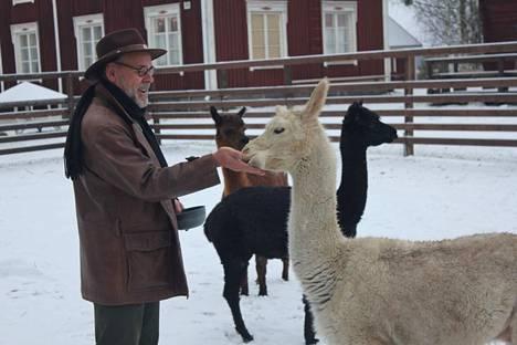 Alpakat saivat Heikki Laaksoselta jouluisia herkkuja.