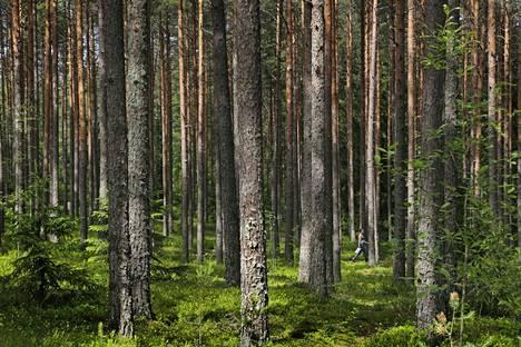 Haistilan nimi tulee kirjoittajan mukaan mänikkönummea tarkoittavasta ruotsinkielen sanasta Haj. Kuva viitteellinen.
