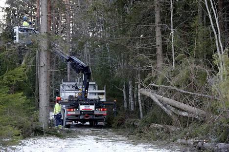 Vuosi sitten talvimyrsky kaatoi puita muun muassa Porin Makholmassa.