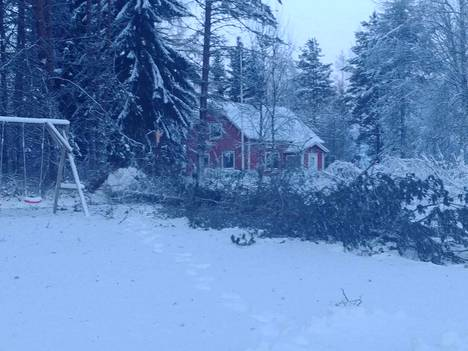 Parkanon Lapinkylässä myrsky kaatoi puun pihapiirissä.