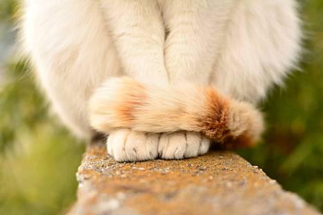 Jos häntä on kiertynyt hyvin tiukasti ympärille, niin kissa voi olla hermostunut.