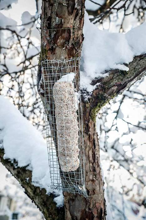 Puuhun kiinnitetystä kanaverkosta saa oivan rasvapidikkeen.