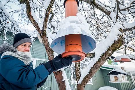 Nokialla perheineen asuva Sari Lehtinen tarjoaa linnuille ruuaksi muun muassa auringonkukan siemeniä, pähkinöitä ja talia. –Käytämme kuorettomia auringonkukan siemeniä, niin ne eivät roskaa pahasti, hän kertoo.