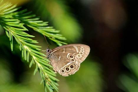 Rauhoitetun kirjopapurikon elinolojen turvaamiseksi määrättiin Kaapelinkulmalla pölynmittaukset sen jälkeen, kun neljä hehtaaria sen metsää kaadettiin.
