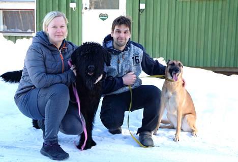 """Jämsän koirahoitola avasi ovensa tällä viikolla. Yrittäjä Ari Nieminen ja Jenni Björk ovat koiraihmisiä henkeen ja vereen.  Suursnautseri Pekka ja belgianpaimenkoira malinois Pirkko kuuluvat hoitolan taustatiimiin. Taustalla koirien """"lomamökki"""", josta löytyy neljä sisätilaa. –Mökin ulkoremontti ja tarhojen terassit odottavat kevään saapumista, Nieminen kertoo."""