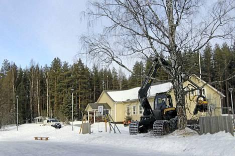 Pohjoislahden koulun lisärakennuksen rakentaminen alkaa. Perjantaina piha-alueen puita kaadettiin uudisrakennuksen tieltä pois. Samalla otettiin muitakin vaaraa tai haittaa aiheuttavia puita.