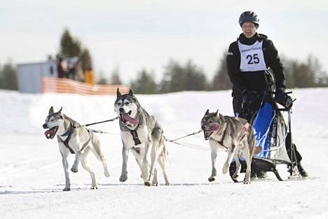 Lauri Kiviojan valjakko lähestyy maalia Jämin kilpailun lauantain osuudella. Kilpailu jatkuu sunnuntaina.