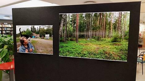 Kaapelinkulmalainen Ritva Taskinen kumartuu kuvassa mättäille, joilla hänen äitinsäkin marjasti. Nyt sama paikka sijaitsee hakkuu-aukion reunassa lähellä kaivoksen työmaa-aluetta.