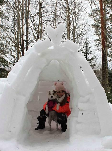 Luminen rakennus oli Mirella Lehtosen, 9, toive ja syntyi koko perheen voimin. –Alkuun Nessu pelkäsi iglua, vaikka on luolakoira, Mirellan isäpuoli Erkki-Jussi Koivuluoma kertoo alle vuoden vanhaan parssonrussellinterrieriinsä viitaten.